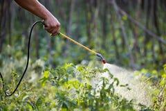 Pesticida humano del espray de la mano Fotos de archivo