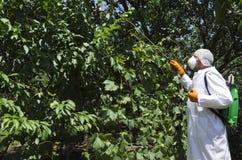 Pesticidas de rociadura del trabajador de Agricilture en los árboles frutales en el jardín imagen de archivo