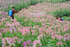 Pesticidas que pintan (con vaporizador) del trabajador chino Imagen de archivo libre de regalías