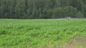 Pesticide de jet de tracteur de ferme, herbicide dans le domaine de maïs 4K banque de vidéos
