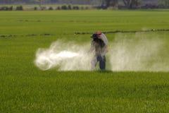 Pesticide de pulvérisation d'agriculteur dans la rizière photographie stock libre de droits