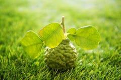 Organic kaffir lime on green lawn Royalty Free Stock Photography