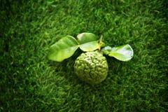 Top view kaffir lime on green lawn Stock Photo