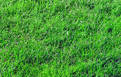Pesticide Free Healthy Lawn Stock Photos