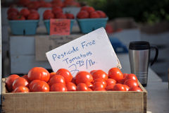 Pesticide free tomatoes Royalty Free Stock Photo