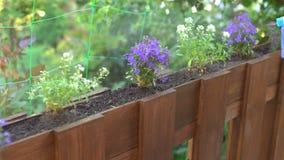 Pesticide ou eau de pulvérisation de jardinier sur des fleurs clips vidéos