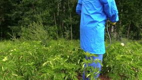 Pesticide on potato protecting of pest, vermin, disease Royalty Free Stock Photo
