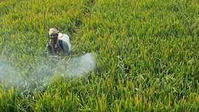 Pesticide spray. India paddy fields Royalty Free Stock Image