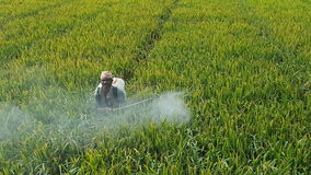 Pesticide spray. India paddy fields Royalty Free Stock Photo
