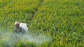 Pesticide spray. India paddy fields Royalty Free Stock Images