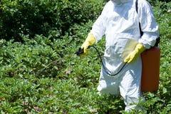 Pesticide spraying. Farmer spraying pesticides. Non-organic vegetables. Pollution royalty free stock photo