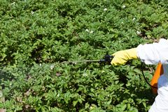 Pesticide spraying. Farmer spraying pesticides. Non-organic vegetables Royalty Free Stock Photography