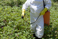 Pesticide spraying Royalty Free Stock Photos