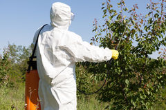 Pesticide spraying. Fruit tree spraying with pesticides in orchard stock photo