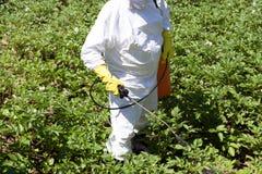 Pesticide spraying. Non-organic vegetables. Farmer spraying toxic pesticides or insecticides in the vegetable garden royalty free stock photos
