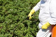 Pesticide spraying. Pollution. Farmer spraying pesticides. Non-organic vegetables stock photos