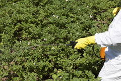 Pesticide spraying. Vegetables spraying with pesticides in a garden stock image