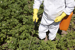 Pesticide spraying. Vegetables spraying with pesticides in a garden royalty free stock photos