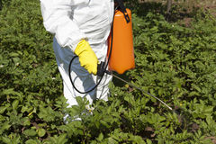 Pesticide spraying. Vegetables spraying with pesticides in a garden stock photography