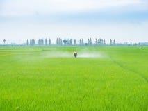 Pesticides de jet d'agriculteur Image stock