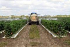 Pesticides de pulvérisation Image stock