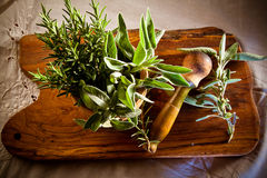 Pestle and mortar with herbs Stock Image