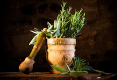 Pestle and mortar with herbs Royalty Free Stock Images