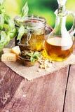 Pesto genovese - tradycyjny włoszczyzny zieleni basilu kumberland z sosną Fotografia Royalty Free