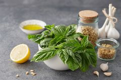 Basil leaves and other pesto sauce ingredients Royalty Free Stock Images