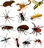 Pests cliparts - insects, scorpion and rat Stock Photo