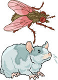 Pests and rodents Royalty Free Stock Photos