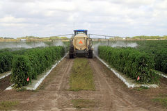 pestycydów target1397_1_ Obraz Stock