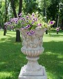 Petúnia no canteiro de flores Fotografia de Stock Royalty Free