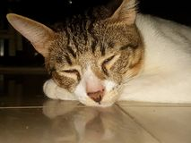 Pet кот стоковое изображение