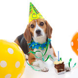 Pet первое торжество вечеринки по случаю дня рождения Стоковые Изображения RF