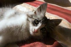pet Photo stock