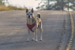 pet Images stock