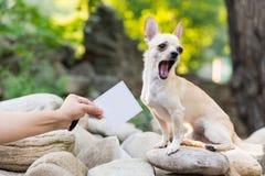 pet photos stock