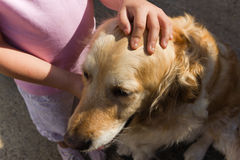 Pet A Golden Girl Royalty Free Stock Image