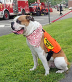 Pet Adoption. Bulldog with adopt me sign at the National Night Out event in Livingston, NJ Stock Photography
