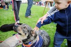 Pet adoption Stock Photos