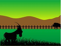 Pet animal. Goat on ground in fence Stock Image