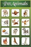 pet animal chart Royalty Free Stock Image