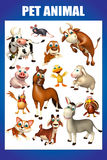 pet animal chart Royalty Free Stock Image