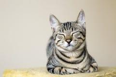 Pet animal; cute cat. Tabby cat indoor stock photo