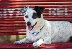 Pet animal; cute dog. The house dog.  stock photography