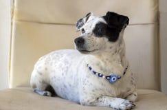 Pet animal; cute dog. The house dog.  stock images