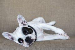Pet animal; cute dog. The house dog.  stock photos