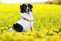 Pet animal; cute dog. Pet animal, cute enjoyable dog in the garden stock images