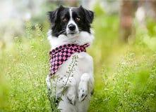 Pet animal; cute dog. Pet animal, cute enjoyable dog in the garden royalty free stock photo